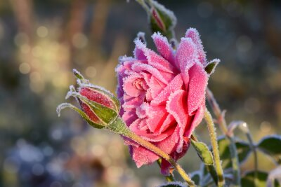 Obraz kwiaty 529