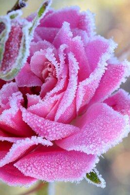 Obraz kwiaty 538