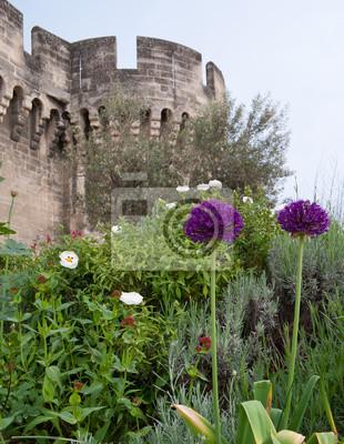 Kwiaty Awinionie