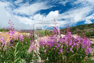 Kwiaty kwitnące w lecie Colorado