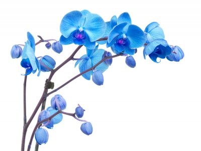Obraz kwiaty orchidei