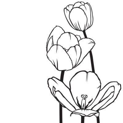 Obraz Kwiaty tulipanów