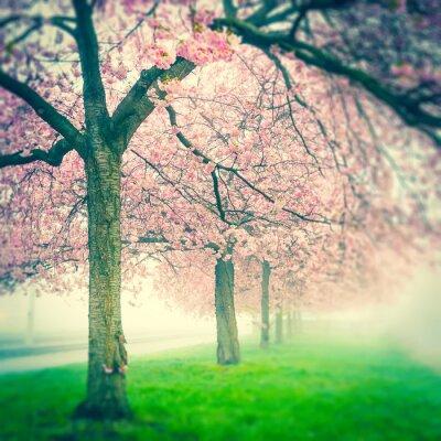Obraz Kwitnąca wiśnia