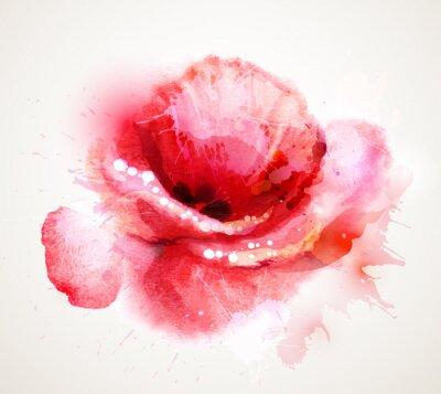 Obraz Kwitnienia czerwony mak