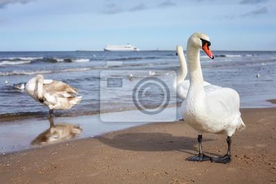 Łabędź na plaży z promem w odległości, selektywne fokus, koncepcji podróży.