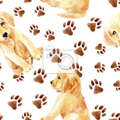 Labrador retriever bez szwu wzór