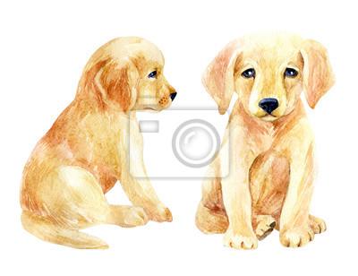 Labrador retriever puppy zestaw