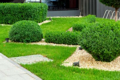 Obraz Landscaping with mulching with pebbles and boxwood bushes in the foreground a manhole, detail closeup.