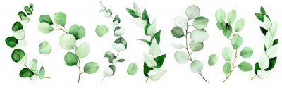 Obraz large set of eucalyptus leaves and branches painted in watercolor. green eucalyptus leaves, tropical plant isolated on white background.