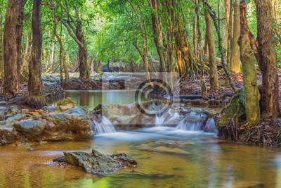 Las. Dżungla las tropikalny deszcz fotografia.