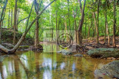 Obraz Las. Dżungla las tropikalny deszcz fotografia.