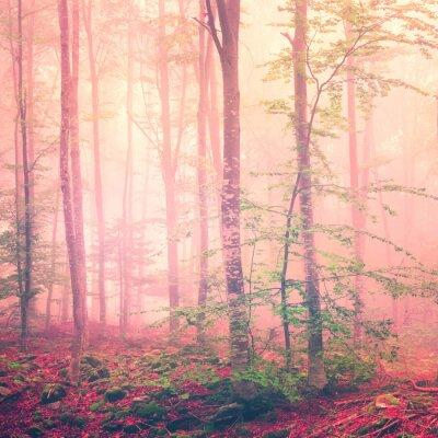 Obraz Las fantazja światło