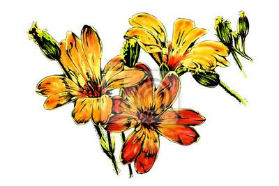 lato, wiosna, kwiat, żółty
