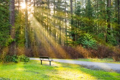 Obraz Ławka w parku miejskim zielonym