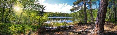 Obraz Leśna panorama nad brzegiem Jeziora