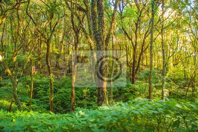 letni deszcz lasu na górze, Tajlandia