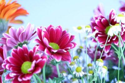 Obraz Letnie kolorowe kwiaty