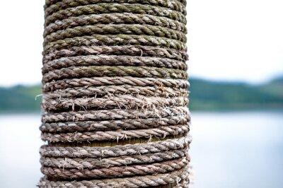Obraz Liny na drewno