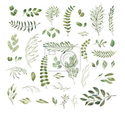Liść Liściasty. Zielone kwiaty akwarela i kwieciste. Ustaw 1