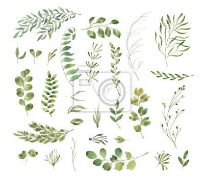 Liść Liściasty. Zielone kwiaty akwarela i kwieciste. Ustaw 2