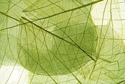 Obraz liści w tle