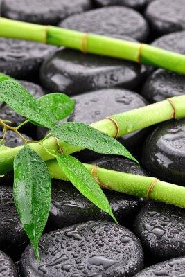 Obraz Líščie z bambusami na kamieniach zrobić spa