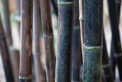 Obraz łodygi bambusa