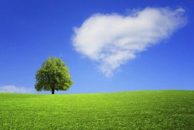 Obraz Lonely tree on the field