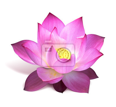 Lotus kwiat