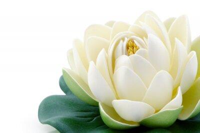 Obraz Lotus kwiat