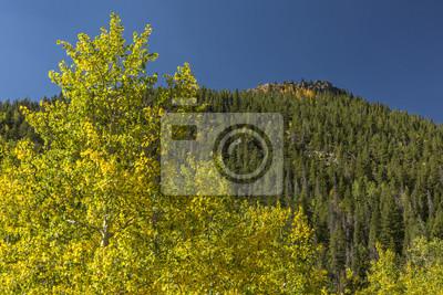 Lumpy Ridge Peak i Golden Aspen Trees