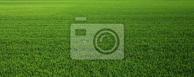 Obraz Lush green grass meadow background
