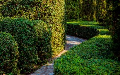 Obraz Luxury landscape design of the tropical garden. Beautiful view of landscaped tropical garden.