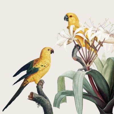 Obraz Macaw tropical illustration