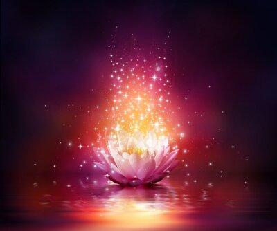 Obraz magiczny kwiat na wodzie