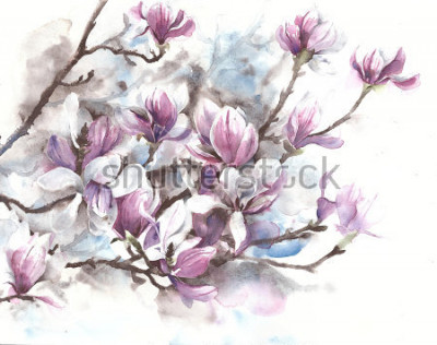 Obraz Magnolia flowers blooming spring blossom magnolia tree watercolor painting
