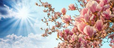 Obraz Magnolia kwiat drzewa z kolorowych na tle nieba