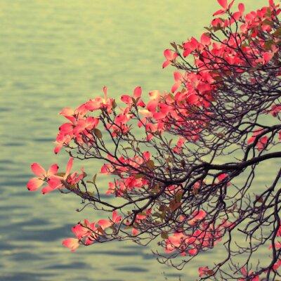 Obraz Magnolia oddział na tle jeziora.
