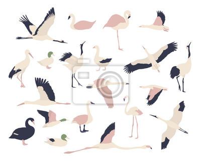 Maison de fleurs. Zestaw ptaków.