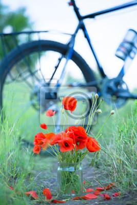 Obraz Maki z roweru