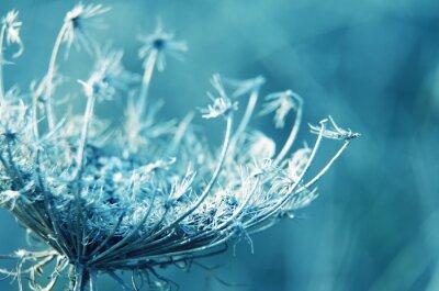 Obraz makro kwiatów tle naturalnych