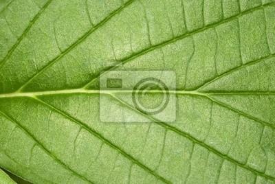 Makro liści tekstury