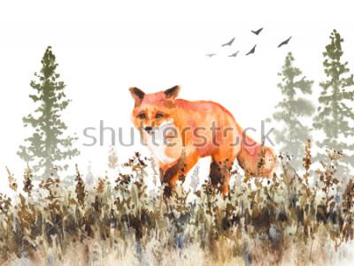 Obraz Malarstwo akwarelowe. Ręcznie opracowane animalistycznej ilustracji. Czerwonego lisa odprowadzenie na blaknięcie łące. Jesień scena z dzikim drapieżnikiem ruch, jodły w mgle i suszonej trawie.