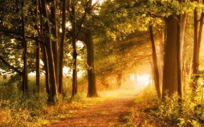 Obraz Malerischer Herbst lädt zum Wandern ein