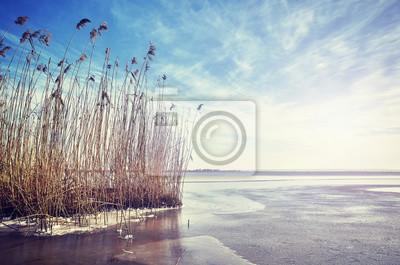 Malowniczy zima krajobraz z suchą płochą w zamarzniętym jeziorze przy zmierzchem, barwi stonowanego obrazek
