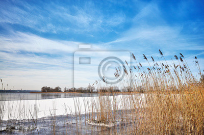 Malowniczy zimowy krajobraz z suchą trzciną zamarzniętego jeziora.