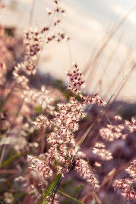 Obraz Mały kwiat trawy na relaks czasu. miękki. pastelowych kolorów