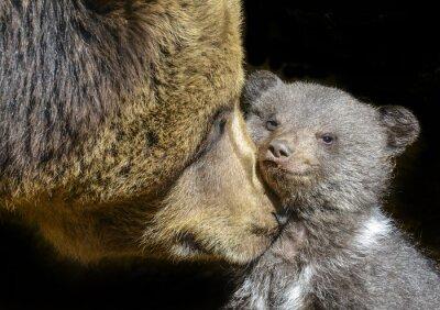 Obraz mały niedźwiedź brunatny i jego matka