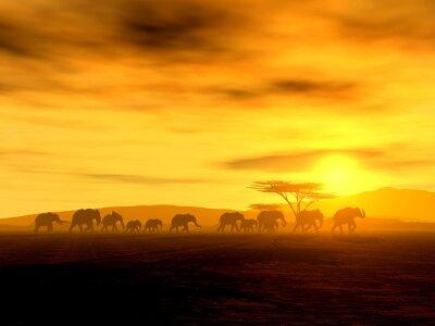 Obraz Marsz słoni