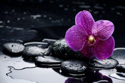 Obraz Martwa natura z kamyka i orchidei z kropli wody